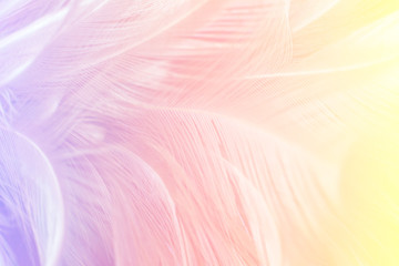 feather soft colorful background