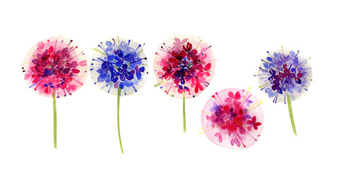 Set of multicolor allium flowers on white background. Hand drawing watercolor illustration