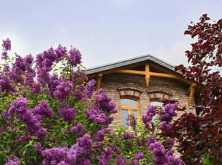 roof of a stone house, between a blossoming lilac and trees