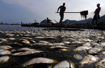Dead fish are pictured next to a rowing athlete, as his coach helps him to clean up his paddle, during a training session at the Rodrigo de Freitas lagoon, in Rio de Janeiro