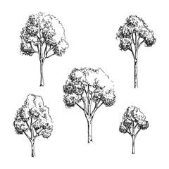 Trees set vector hand drawing