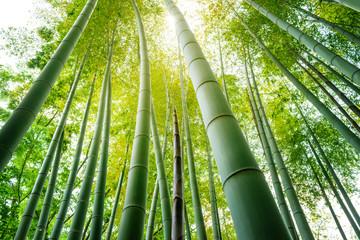 竹林の竹の子