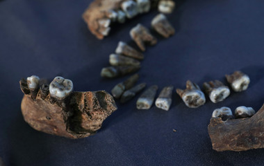 Human skeleton bones discovered in a previously unknown Anglo-Saxon cemetery in Norfolk are seen at the offices of MOLA