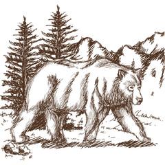 animal wild bear, landscape hand-drawing. vector illustration.