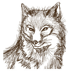 Door stickers Hand drawn Sketch of animals wolf wildlife animal image is hand drawn. portrait pencil sketch of wolf vector illustration