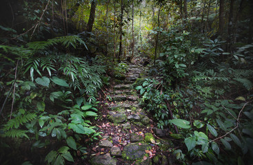 Stone path in the jungle