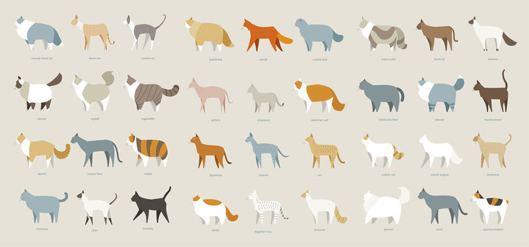 cat breed set vector illustration flat design