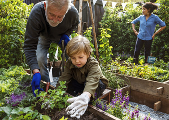 Family planting vegetable from backyard garden Fototapete
