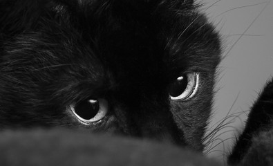A Closeup of a Black Cat Looking to the Right