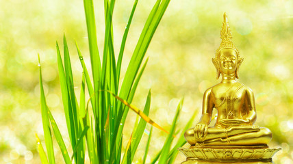 Buddhism statue ,field of water drop on grass and sun in morning