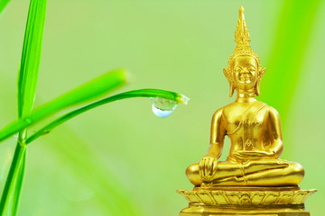 Buddhism statue ,field of grass water drop and sun in morning