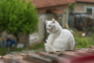 Cat on the roof is looking down