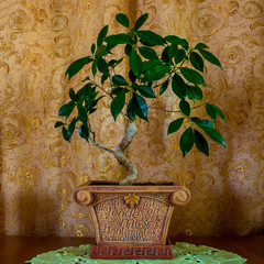 Photo of a beautiful bonsai tree on a brown background