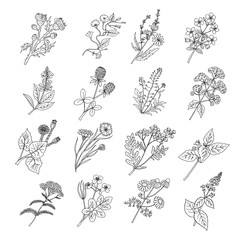 Botanical sketch drawings. Vector illustration of flowers and botanic herbs