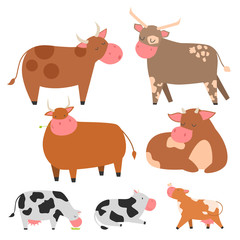 Bulls cows farm animal character vector illustration cattle mammal nature wild beef agriculture.