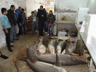 """Residents observe dead mud sharks, also known as """"dogfish"""", on the ground at a fishmonger's stall in the coastal city of Tyre, southern Lebanon"""