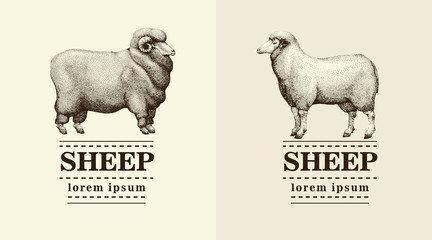silhouette sheep, logo template, vector hand drawn illustration.