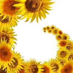 spiral of yellow sunflowers