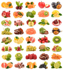 collection fruits