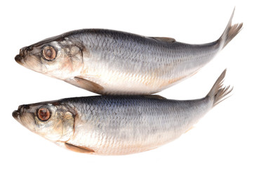Herring on a white background