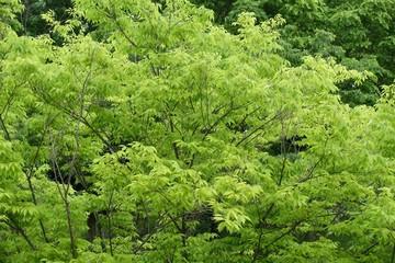 多摩の新緑