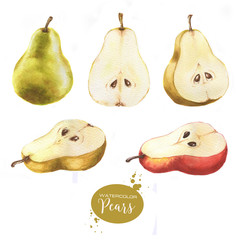 Hand-drawn watercolor isolated illustration set of tasty ripe pears on the white background.