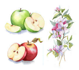 Hand-drawn watercolor illustration of the green and red apples. Food and botanical drawing isolated on the white background: apples, blossom, leaves, and branch.