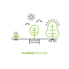 Planting process infographic. Growth stages.