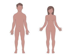 Male and Female Human Body Shapes
