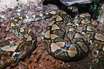 Python in Zoo terrarium