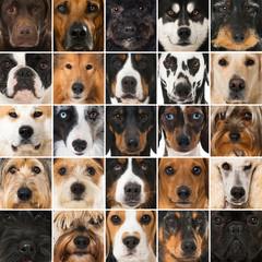 Hundeschnauzen Collage