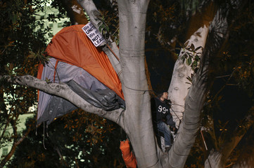 A protester takes a stand with his tent up a tree at the Occupy Los Angeles encampment at City Hall Park after the midnight deadline for eviction from City Hall Park passes in Los Angeles
