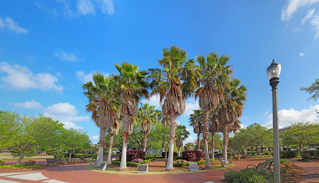 Circle of palm trees on the Beaufort, South Carolina waterfront