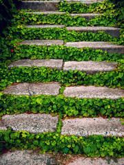 Stone staircase with green plants.