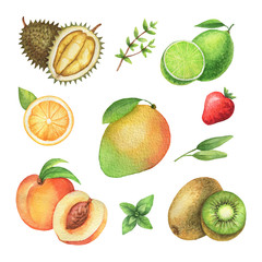 Watercolor organic set of fruits and herbs isolated on white background.
