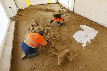 French archaeologists work to finish up the excavation of a preserved mammoth skeleton at a quarry site in Changis-sur-Marne, East of Paris