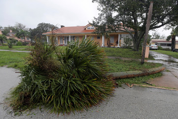 A downed palm tree lies in front of a house after the eye of Hurricane Matthew passed Daytona Beach