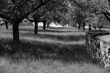 Obstbäume und Schatten