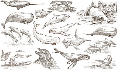 Cetaceans, Cetacea - An hand drawn pack, freehand sketching - full sized collection on white, isolated.