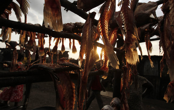 """Fish skeletons are dried on wooden poles at the Obunga """"mgongo-wazi"""" fish frying market in Kisumu"""