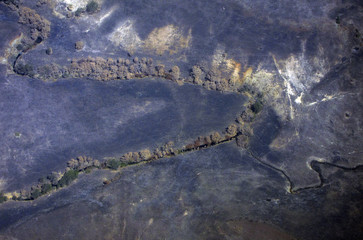 Burnt trees line a small creek in a paddock effected by a recent fire on the outskirts of Melbourne
