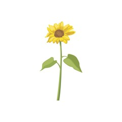 Sunflower Vector Template Design