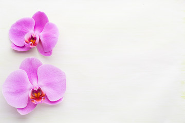 Pink beautiful orchid on colored background.