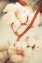Cotton buds detail