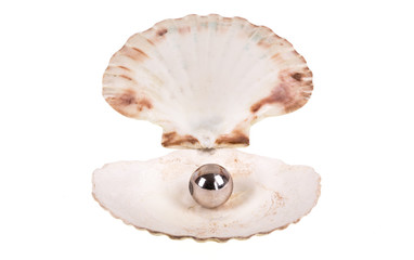 Open seashell with pearl on white isolated background