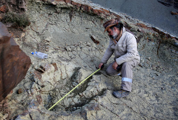 The Wider Image: Following in a dinosaur's footsteps