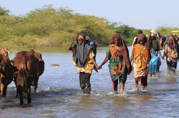 Women and their livestock wades cross the flooded Shebelle River in Jowhar for higher grounds north of Somalia's capital Mogadishu