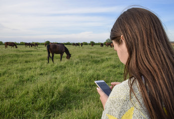 The girl takes pictures of horses grazing on the phone. Girl with a smartphone.