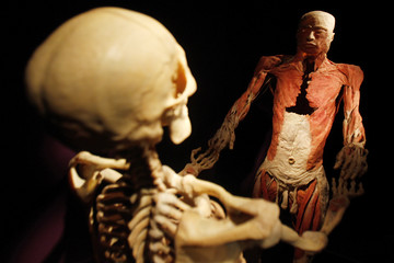 """Two plastinated human bodies, part of """"The Human Body"""" exhibition, are seen during a media tour at Antipa Museum in Bucharest"""