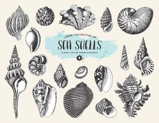 retro Sommer und Meer Design Elemente: Set / Sammlung von Muscheln und Schnecken Zeichnungen